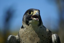 PSNI using Latest Technology to Prevent & Combat Wildlife Crime