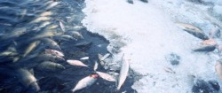 One fish kill incident is unacceptable - 150 is unsustainable - McMullan